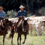 Kristin Scott Thomas - galeria zdjęć - Zdjęcie nr. 7 z filmu: Zaklinacz koni