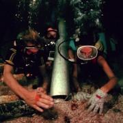 Nick Nolte - galeria zdjęć - Zdjęcie nr. 6 z filmu: Głębia
