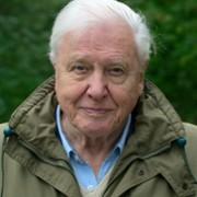 David Attenborough - galeria zdjęć - filmweb