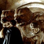 Rupert Grint - galeria zdjęć - Zdjęcie nr. 4 z filmu: Harry Potter i Kamień Filozoficzny