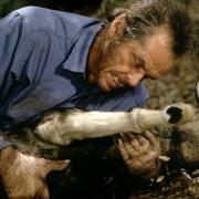 Jack Nicholson - galeria zdjęć - Zdjęcie nr. 8 z filmu: Wilk