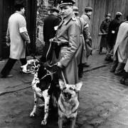Ralph Fiennes - galeria zdjęć - Zdjęcie nr. 14 z filmu: Lista Schindlera