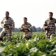 George Clooney - galeria zdjęć - Zdjęcie nr. 2 z filmu: Bracie, gdzie jesteś?