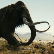 Steven Strait - galeria zdjęć - Zdjęcie nr. 13 z filmu: 10.000 B.C.