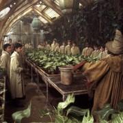 Rupert Grint - galeria zdjęć - Zdjęcie nr. 11 z filmu: Harry Potter i Komnata Tajemnic