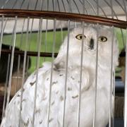 Rupert Grint - galeria zdjęć - Zdjęcie nr. 13 z filmu: Harry Potter i Komnata Tajemnic