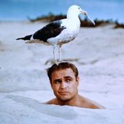 Marlon Brando - galeria zdjęć - Zdjęcie nr. 6 z filmu: Opowieść do poduszki