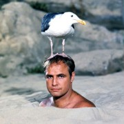 Marlon Brando - galeria zdjęć - Zdjęcie nr. 18 z filmu: Opowieść do poduszki