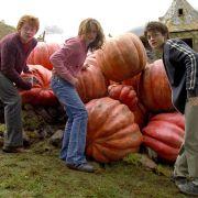 Rupert Grint - galeria zdjęć - Zdjęcie nr. 12 z filmu: Harry Potter i więzień Azkabanu
