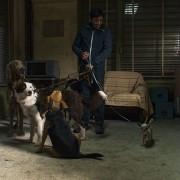 Marcello Fonte - galeria zdjęć - Zdjęcie nr. 2 z filmu: Dogman