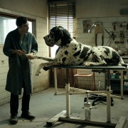 Marcello Fonte - galeria zdjęć - Zdjęcie nr. 10 z filmu: Dogman