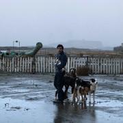 Marcello Fonte - galeria zdjęć - Zdjęcie nr. 12 z filmu: Dogman