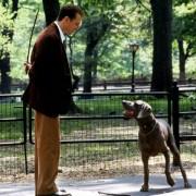 Ralph Fiennes - galeria zdjęć - Zdjęcie nr. 19 z filmu: Pokojówka na Manhattanie