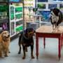 Psy i koty 3: Łapa w łapę - galeria zdjęć