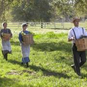 AJ Michalka - galeria zdjęć - Zdjęcie nr. 15 z filmu: Expecting Amish