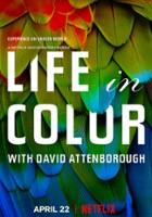 plakat - David Attenborough: Życie w kolorze (2021)