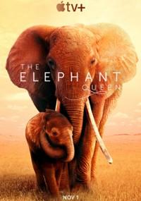 Królowa słoni (2018) plakat