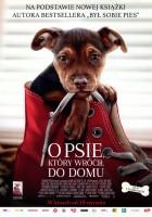 plakat - O psie, który wrócił do domu (2019)