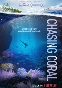 Ścigając koralowce (2017) plakat