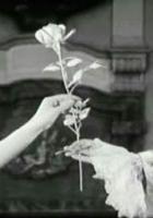 Kawaler srebrnej róży
