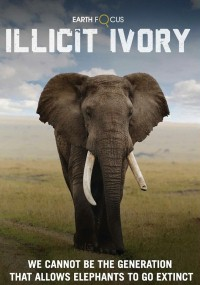 Earth Focus: Illicit Ivory
