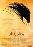 plakat - Czarny rumak (1979)