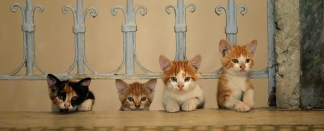 14 - Yellows Kitten in KEDI.jpg