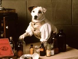 """Reżyser """"Green Booka"""" opowie o psie kochającym książki"""
